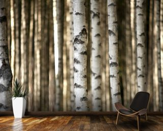 Forest wall murals tree woodland wallpaper for Birch trees wallpaper mural